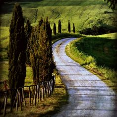 The road to Terrapille (Pienza, Italy)