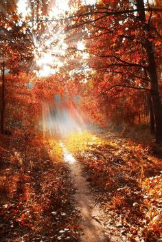 Path to the light, stunning autumn