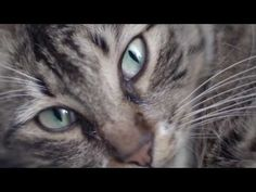Kedi (2017) - documentary about stray cats in Istanbul