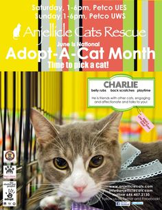 Charlie!!!!!! Adoption events Saturdays and Sunday to see our adoptable cats.  Petco, 1280 Lexington Ave, NY, Sat 1-6pm. Petco UWS 805 Columbus Ave, NY, Sun 1-6pm. Spoiled Brats, 340 W. 49th St., NY, permanent catroom. Visit us! http://anjelliclecats.homestead.com/cats.html