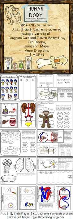 Over 30 Interactive Science Notebook activities for the Human Body covering Intro to human body and the following systems: Integumentary, Muscular, Skeletal, Digestive, Urinary, Circulatory, Lymphatic, Respiratory, Reproductive, Endocrine, and Nervous.