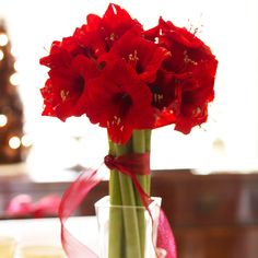 A long-stemmed arrangement of red amaryllis is simple and elegant. There is a wide variety of red amaryllis plants you can choose from. The Benfica variety is rich in color, while the Monaco is bright. Make it a very merry Christmas display by tying a red ribbon around the group of stems./