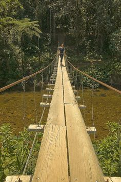 Foot Bridge - Marimba, Brazil.  The jungle behind the guy is amazing. would love to go and explore the jungle!