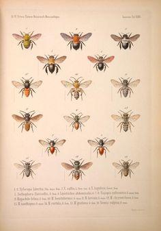 v.5 - Naturwissenschaftliche Reise nach Mossambique, auf Befehl Seiner Majestät des Königs Friedrich Wilhelm IV, in den Jahren 1842 bis 18...