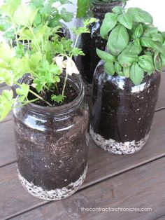 How to Plant Herbs In Mason Jars - The Contractor Chronicles#at_pco=smlwn-1.0&at_si=54c9781b5bcc26dd&at_ab=per-2&at_pos=0&at_tot=1#at_pco=smlwn-1.0&at_si=54c9781b5bcc26dd&at_ab=per-2&at_pos=0&at_tot=1