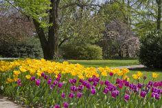 """Il 17 Aprile la Fondazione Minoprio (Como), in occasione delle fioriture primaverili, apre il suo Parco botanico per """"Una primavera bella e buona"""". I visitatori potranno godere di piacevoli passeggiate, imparare i segreti del giardinaggio, ammirare colorate e splendide fioriture, sorprendersi con fantasiose aiuole di ortaggi e annuali. Sempre affascinanti la serra tropicale, il giardino mediterraneo oltre alle collezioni arboree e arbustive del parco"""