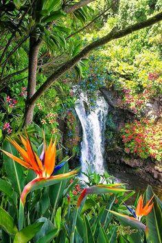 Bird of Paradise Waterfall, Hawaii