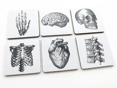 6 Anatomy Coasters