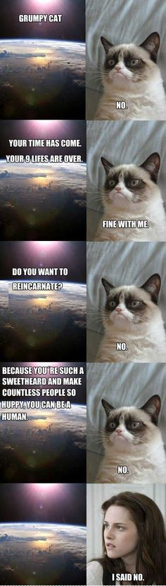 I usually don't enjoy the 'Grumpy Cat', but this one actually made me smile. *minus the grammar corrections I was making as I was reading*