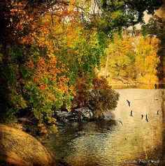 A Sunny Autumn Day by Milla's Place, via Flickr