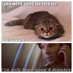 Pinning mostly because the cat is too adorable. And....because I miss Sherlock already.