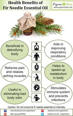 Some of the health benefits of fir needle essential oil include its ability to reduce pain, prevent infections, improve respiratory function, increase the metabolism, detoxify the body, and reduce body odor.