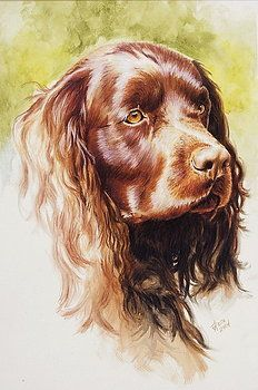 Barbara Keith - American Water Spaniel