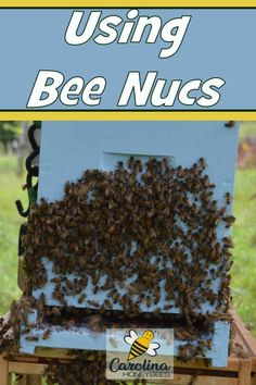 What is a Bee Nuc-Why all the Fuss? Using nuc sized honey bee colonies is a great tool for any beekeeper. What Is A Bee, Bee Nuc, Types Of Honey Bees, How To Start Beekeeping, Package Bees, Langstroth Hive, Small Bees, Small Farm, Bee Facts