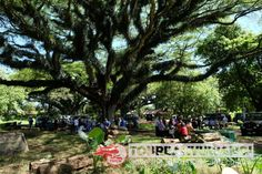 Paket gathering kantor di wisata hutan Jawatan Benculuk