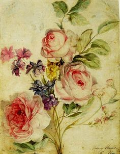 Mary Moser (English artist, 1744–1819) Botanical Drawing 1769