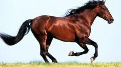 Come strigliare un cavallo