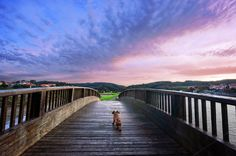 Dog in a bridge at sunset (stock photo by mimadeo on Creative Market)