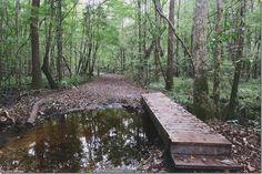 Hiking at University of North Florida, UNF.