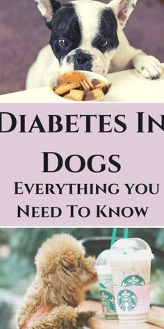 Dog Health Tips, Dog Health Care, Dog Care Tips, Pet Care, Dogs Peeing In House, Dog Pee Smell, Tiny Dog Breeds, Dog Shaking, Diabetic Dog