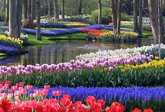 Visits to the these gardens are some of my fondest childhood memories! Keukenhof Gardens, Lisse, South Holland, The Netherlands