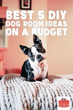 Our dogs are like family and like family they deserve their own room. Check out these DIY dog room ideas that you can build on a budget from DIY toys to beds. Puppy Potty Training Tips, Dog Training Videos, Puppy Room, Dog Home Decor, Animal Room, Dog Rooms, Dog Houses, Dog Care, Dog Owners
