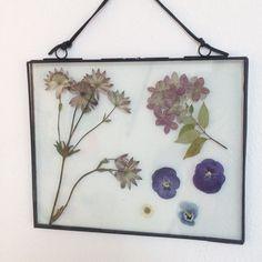 Bloemen / droogbloemen in een transparante lijst.