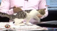 """""""O Grito do Bicho"""": Gato abandonado entra em estúdio durante telejorna..."""