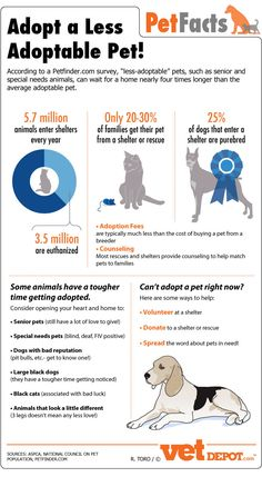 Adopt a less adoptable pet!