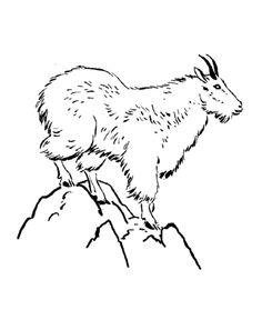 wild animal coloring page mountain goat coloring page sheets - Coloring Page Goat