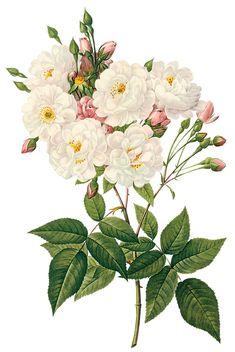 Beyaz çiçekli dekupaj resimleri