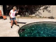 Peoria   dog training ''k9katelynn'' teaches ''fritz '' (Border collie)  how to swim in the pool without the client getting wet at Peoria ,AZ ! See more about phoenix dog training at k9katelynn.com