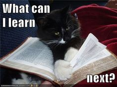 Growth Mindset Memes: English: What can I learn next?