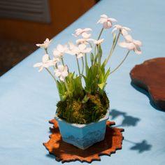 Bonsai Accent Plant 63