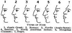 Image result for nose shapes
