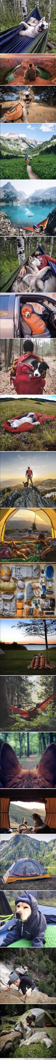Nada mejor que tu perro para viajar