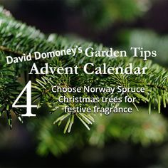 David Domoney's Garden Tips Advent Calendar day 4