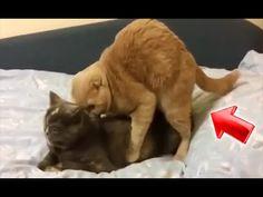 videos de gatos graciosos y divertidos - videos de risa 2014 chistosos