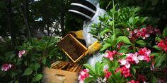 Best Bees.com