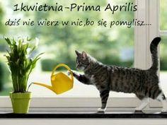 Najlepsze obrazy na tablicy Prima Aprilis (7) w 2020 | Prima ...