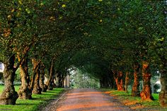 Autumn Light in Hietaniemi Cemetary, Helsinki Grave Monuments, Autumn Lights, City Landscape, Flowering Trees, Helsinki, Amazing Nature, Cemetery, Finland, Cool Pictures