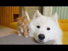 Puppy Love, Puppies, Pure Products, Cats, Animals, Youtube, Cubs, Gatos, Animales