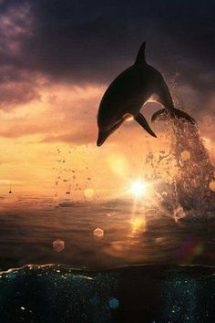 There is nothing more magical than watching an Anna Maria Island sunset, and spotting dolphins!