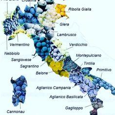 Wine Facts, Wine Varietals, Wine News, Wine Education, Wine Guide, Wine Collection, Wine Bottle Labels, In Vino Veritas, Italian Wine