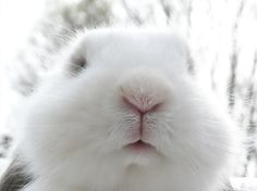 One day, if my future children want another pet, a rabbit it will be. The big ones are great with kids.