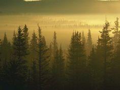 fotografias de bosques | Fotos de Bosques. Bajalos gratis. - Bosque 015
