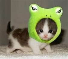 world's cutest cat - Bing Images