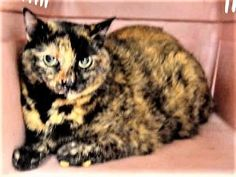 8 year old SPARKLE came in with 3 other kitties who may be her siblings - owner dumped for
