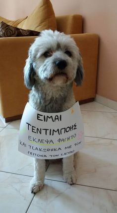 Happy Animals, Animals And Pets, Funny Animals, Funny Greek, Good Notes, Minions, Dogs And Puppies, Dog Lovers, Pitbulls