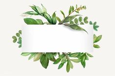 Tropical botanical banner design illustration premium image by Aum Donlaya Kappy Kappy manotang Flower Background Wallpaper, Framed Wallpaper, Sunflower Wallpaper, Flower Backgrounds, Wallpaper Desktop, Molduras Vintage, Powerpoint Background Design, Deco Floral, Floral Border